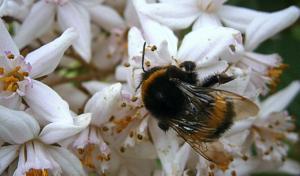 specialist at work is queen bee